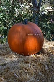 Pumpkin Patch Spokane Valley Wa by Pumpkin Facts To Know Writer Mariecor