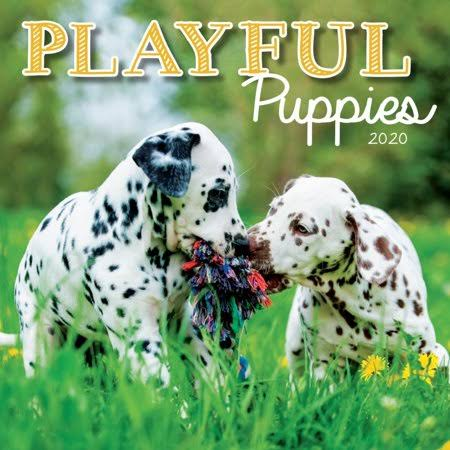 Turner Licensing Playful Puppies 2020 Mini Wall Calendar