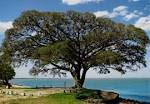 imagem de São Lourenço do Sul Rio Grande do Sul n-4
