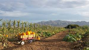Pumpkin Patch Petting Zoo Dfw by Charming Pumpkin Patches In Nevada Are Picture Perfect For A Fall Day