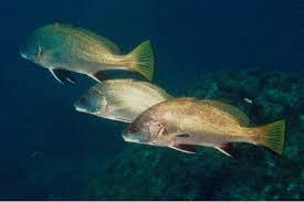 %name Balıklar Hakkında Bilmemiz Gerekenler