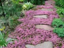 Flowers For Flower Beds by Live Mulch How To Plant Sweet And Low Flowering Ground Cover