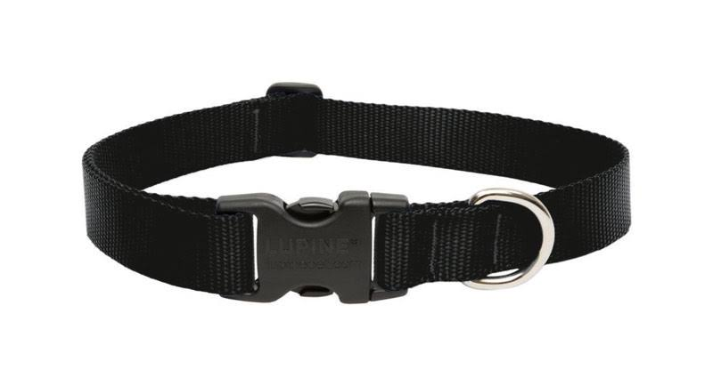 LupinePet Adjustable Dog Collar - Black, 16-28""
