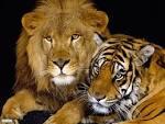 صور اروع الحيوانات images?q=tbn:ANd9GcT
