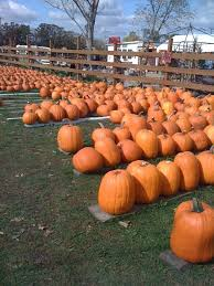 Pumpkin Fest Highwood by Festivals And Fairs In Lake County Summer 2017 Little Lake County