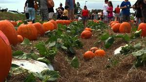 Free Pumpkin Patches In Colorado Springs by Best Pumpkin Patches In The West Palm Beach Area Axs
