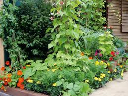 Flowers For Flower Beds by Combining Vegetables And Flowers In Your Garden Diy