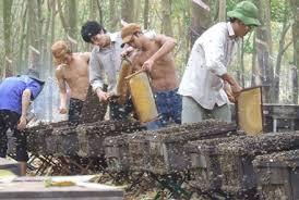 Kỹ thuật nuôi ong mật