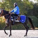 新馬, 日本, 栗東トレーニングセンター, 池江泰寿, 有馬記念, 競走馬の血統, ディープインパクト