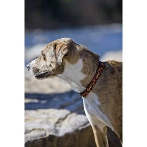 Lupine Down Under Martingale Combo Collar - 3/4 x 10-14 in
