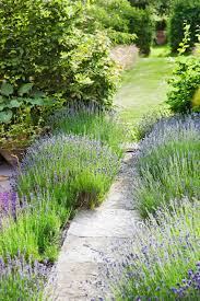 Flowers For Flower Beds by 13 Easy Garden Plants To Grow Cheap Hardy Plant Ideas