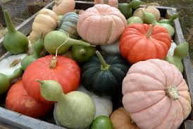 Pumpkin Patch Pueblo County by 4 South Metro Place To Pick Pumpkins With The Family