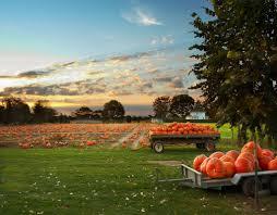 Free Pumpkin Patch Houston Tx by Pin By Emily Smith On Autumn Pinterest Linus Van Pelt