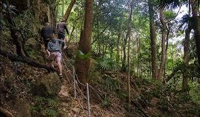 mount kembla, wollongong, ring track, summit, top, view