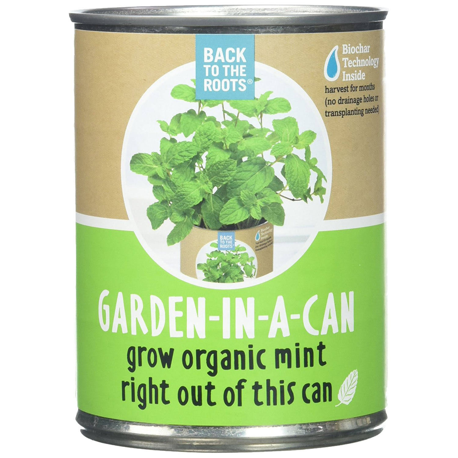 Back to the Roots Garden-in-a-Can Organic Mint Plant