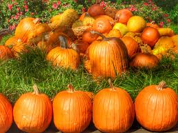 Pumpkin Patch Petting Zoo Dfw by Awesome Fall Things To Do In Dallas Fort Worth