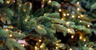Balsam Christmas Tree Australia by How To Avoid