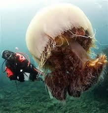 Makhluk Yang Dapat Hidup Abadi Telah Ditemukan Makhluk Yang Dapat Hidup Abadi Telah Ditemukan