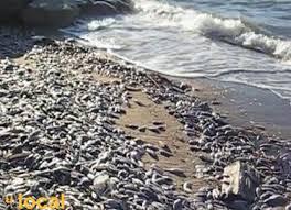 Mass fish death
